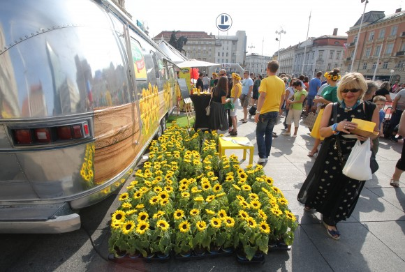 Obojili smo glavni zagrebački trg u žuto stotinama suncokreta
